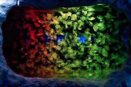 Photo pour Méduses nageant sous l'eau dans l'aquarium avec éclairage au néon coloré - image libre de droit