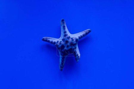 Photo pour Étoiles de mer nageant sous l'eau dans un aquarium à éclairage bleu - image libre de droit