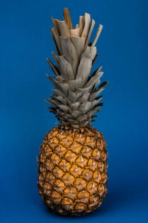 Photo for Tasty, organic and whole pineapple on blue background - Royalty Free Image