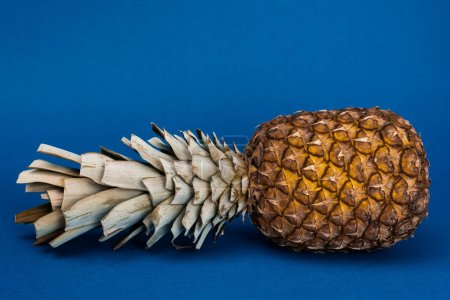 Photo for Tasty, organic and whole pineapple on blue background with copy space - Royalty Free Image