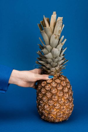 Photo for Cropped view of woman holding tasty and whole pineapple on blue background - Royalty Free Image