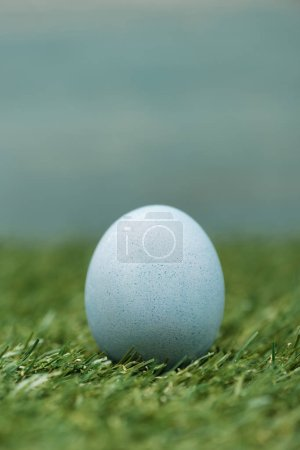 Photo for Blue chicken egg on grass, easter concept - Royalty Free Image