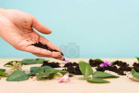 Photo pour Vue agrandie d'une poignée de terre dans la main de la femme avec feuilles et bourgeons sur bleu et beige, concept jour de la terre - image libre de droit