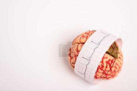 Photo pour Modèle du cerveau avec électrocardiogramme sur papier et fond blanc - image libre de droit