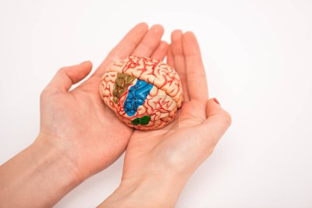Photo pour Cropped view of woman holding brain model with colored parts on white background, alzheimer disease concept - image libre de droit