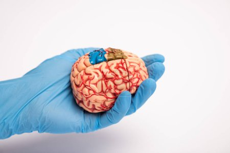 Photo pour High angle view of doctor holding brain model with colored parts on white background, alzheimer disease concept - image libre de droit
