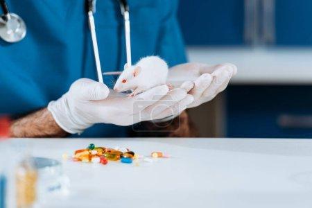 Photo pour Vue recadrée du vétérinaire dans des gants en latex tenant la souris blanche près des capsules sur la table - image libre de droit