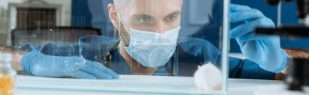Photo for Panoramic shot of young biologist in medical mask and latex gloves looking at white mouse in glass box - Royalty Free Image