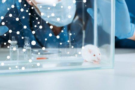 Ausgeschnittene Ansicht eines Tierarztes in medizinischer Maske und Latexhandschuhen, der Glaskasten mit weißer Maus in der Nähe von Ampullen und Behältern mit Medikamenten berührt