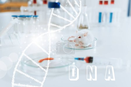 Photo for Selective focus of white mouse near syringe, petri dish with blood sample and containers with medicines, dna illustration - Royalty Free Image