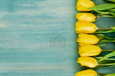 Photo for Top view of yellow tulips on blue textured surface, mothers day concept - Royalty Free Image