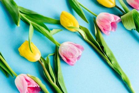 Photo pour Fleurs de tulipes jaunes et roses sur bleu, concept de fête des mères - image libre de droit