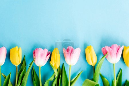 top view of blossoming yellow and pink tulips on blue, mothers day concept