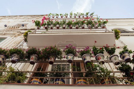 Bottom view of blooming flowers on balcony of house in Catalonia, Spain