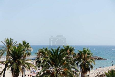 Photo pour Palmiers et côte avec ciel bleu en arrière-plan en Catalogne, Espagne - image libre de droit
