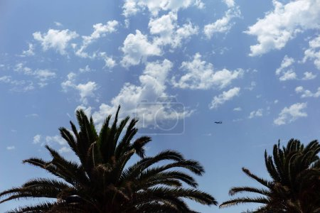 Photo for Low angle view of palm trees and plane in blue sky with clouds - Royalty Free Image