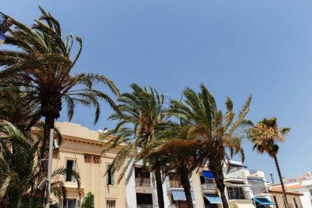 Photo pour Palmiers dans la rue avec maisons et ciel bleu à l'arrière-plan en Catalogne, Espagne - image libre de droit