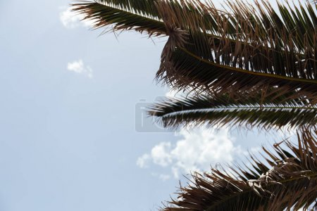 Photo pour Vue du bas des branches de palmiers avec le ciel à l'arrière-plan - image libre de droit