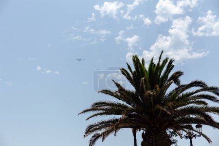 Photo for Low angle view of palm tree and airplane in sky with clouds - Royalty Free Image