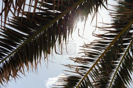 Foto de Vista de fondo de ramas de palmeras con luz solar y cielo azul. - Imagen libre de derechos