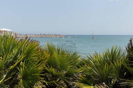 Photo pour Foyer sélectif de branches de palmiers avec la mer et le ciel bleu en arrière-plan en Catalogne, Espagne - image libre de droit