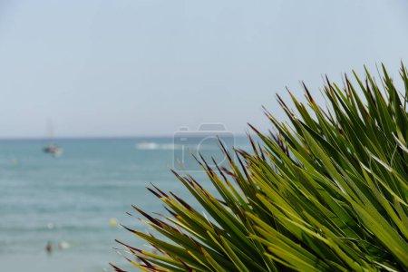 Photo pour Concentration sélective de brunchs verts de palmiers avec la mer et le ciel bleu en arrière-plan en Catalogne, Espagne - image libre de droit