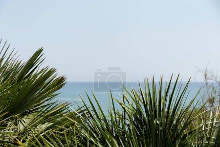 Photo pour Concentration sélective de branches de palmiers avec paysage marin et ciel en arrière-plan en Catalogne, Espagne - image libre de droit