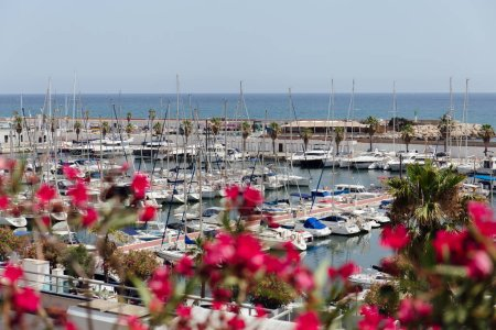 CATALONIA, SPAIN - APRIL 30, 2020: Selective focus of yachts near pier and blooming plant on sea coast