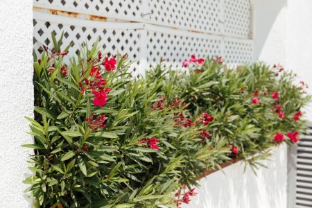 Selective focus of blooming plants with red flowers in flowerbed near building