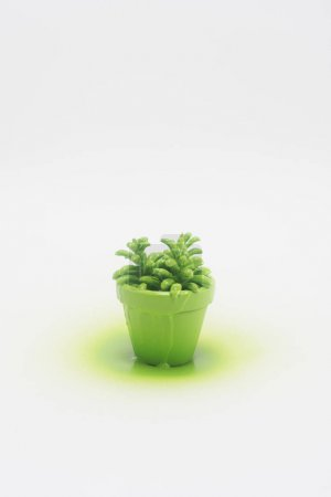 close up view of plant in green flowerpot isolated on white