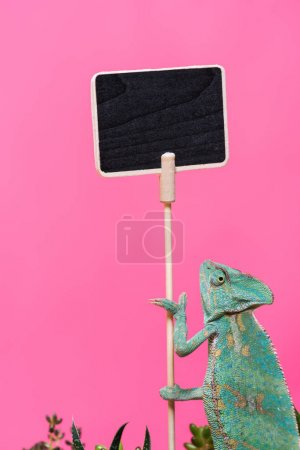 cute colorful chameleon near blank board isolated on pink