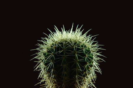 close-up view of beautiful green cactus with thorns isolated on black