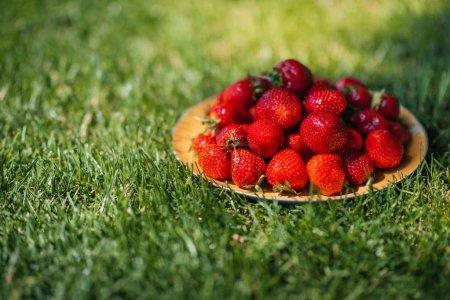 Fresh strawberries on grass