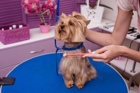 groomer grooming dog