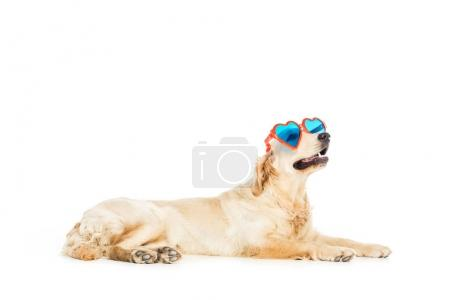 Dog in heart shaped sunglasses