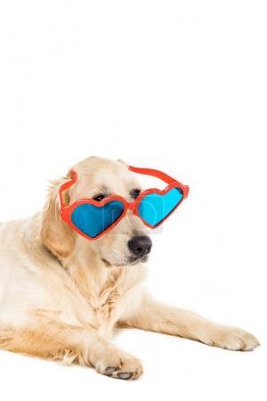 dog in heart shaped sunglasses
