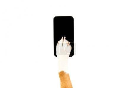 Dog using smartphone
