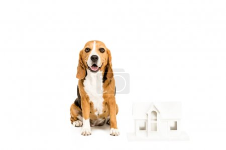 Dog with house model