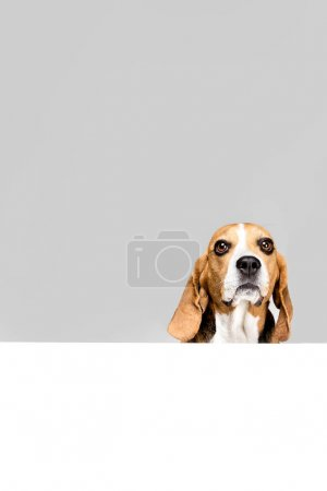 dog with empty blank