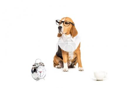dog in eyeglasses with clock and cup