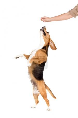 dog jumping up