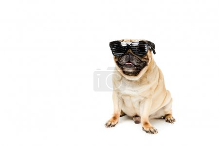 Photo pour Plan studio de chien chiot élégant dans des lunettes de soleil, isolé sur blanc - image libre de droit