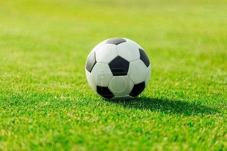 Photo for Close-up view of leather soccer ball on green grass - Royalty Free Image