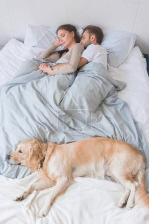 Dog sleeping on bed with couple
