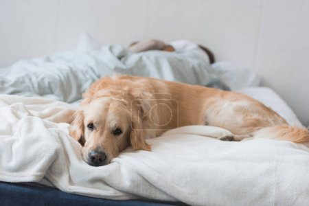 Dog lying on bed with couple
