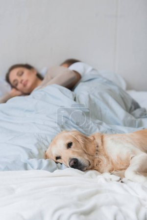 Dog sleeping on bed with young couple