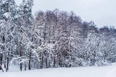 scenic view of snow covered trees in winter park