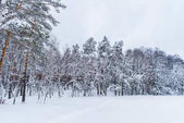 scenic view of snow covered trees in winter forest