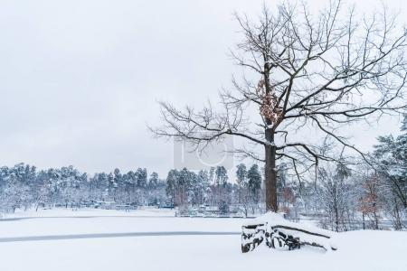 dry tree, frozen lake and snow covered trees in winter park