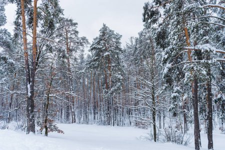 scenic view of beautiful snow covered trees in winter park